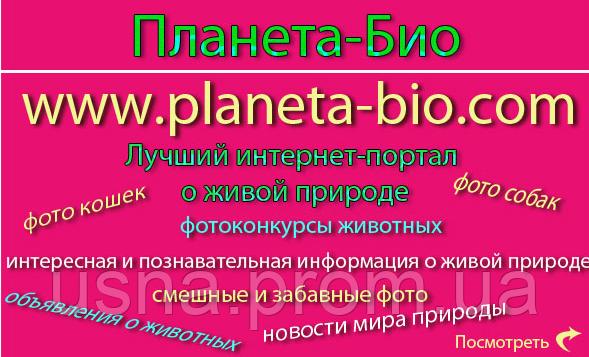 сайт фотоприколов: