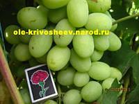 Саженцы винограда,сорт винограда Богатяновский