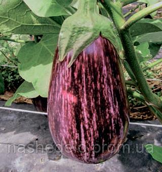 Семена баклажана Лейре F1 1000 семян Rijk Zwaan