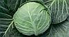 Семена капусты б/к Силима F1 1000 семян (калиброванные) Rijk Zwaan
