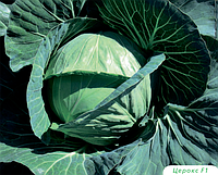 Семена капусты б/к Церокс F1 2500 семян Bejo