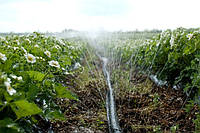 Микроорошение Goldenspray 10-ти метровый D (голден спрей)