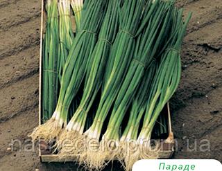 Семена лука на перо Параде 250000 семян Bejo