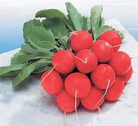 Семена редиса Сора 250 грамм Nunhems