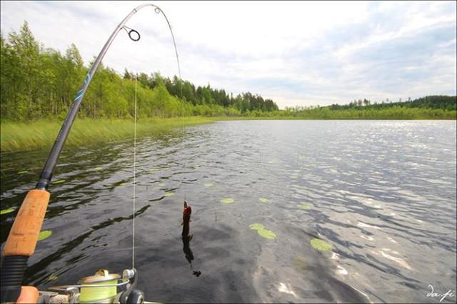 только с рыбалки форум 2016 харьков