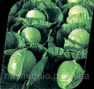 Семена капусты б/к Гермес F1 2500 семян Seminis