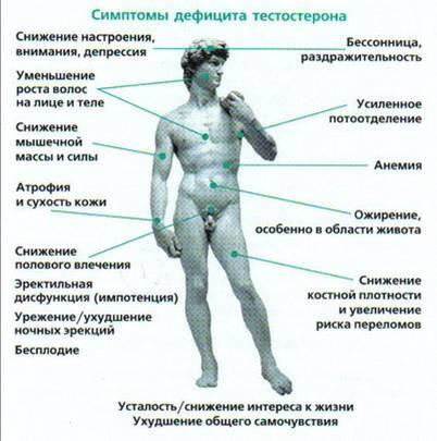 masturbatsiya-uvelichit-kolichestvo-testosterona