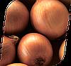 Семена лука Антилопа F1 250000 семян Seminis