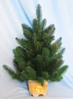 Искусственная елка литая в керамическом горшке 0,6 м.