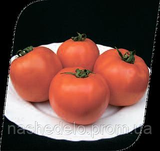 Семена томата Таня F1 1000 семян Seminis