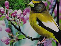 Набор алмазной вышивки Райская птичка