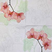 Красивые салфетки для декупажа Орхидея 514