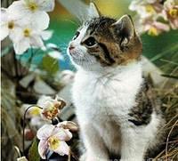 """Алмазная вышивка """"Красивый котенок в цветах"""" (набор мозаики)"""