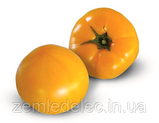 Семена томата KS 10 F1 100 семян Kitano