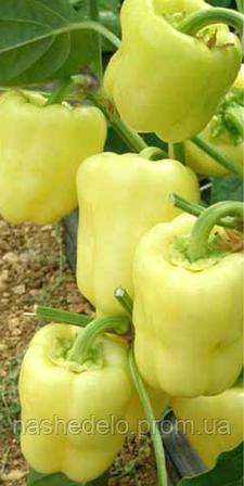 Семена перца сладкого Ведрана F1 500 семян Enza Zaden