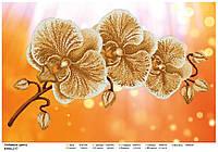 """""""Любимые цветы""""  Схема для   вышивки бисером А2."""