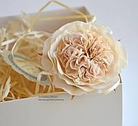 Английская роза айвори