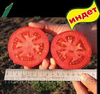 Семена томата Пьетро F1 250 семян Clause