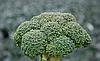 Семена брокколи Корос F1 1000 семян Clause
