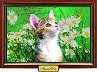 """Схема для вышивки бисером """"Котёнок и ромашки"""""""