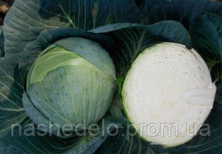Семена капусты б/к Центурион F1 10000 семян Clause