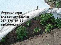 Агроволокно белое 42 г/м²  1,6х100