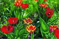 Схема для вышивки бисером «Тюльпаны»