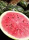Семена арбуза Бостана F1 1000 семян Syngenta, фото 2