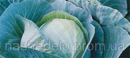 Семена капусты б/к Триперио F1 2500 семян Syngenta