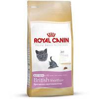 Royal Canin  сухой корм для британских короткошерстных котят с 4 до 12 месяцев - 2 кг