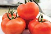 Семена томата Т-97082 (Квалитет) F1 1000 семян Syngenta