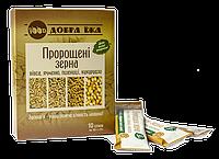Проросшие зерна овса, ячменя, пшеницы, кукурузы в стиках