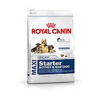 Royal Canin Maxi Starter сухой корм для щенков до 2 месяцев, беременных и кормящих сук- 15 кг