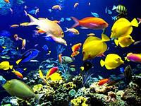 Аквариумистика (товары для рыб)