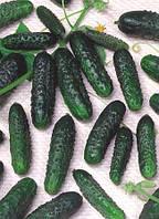 Насіння огірка Маша F1 / Masha F1  SEMINIS (від 1000 насінин)