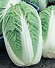 Семена пекинской капусты Пионер F1 1000 семян Nasko