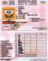 Водительское удостоверение Губка Боб