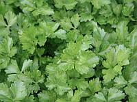 Итальянский Гигант семена петрушки листовой Griffaton 50 г