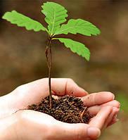 Семена растений и деревьев