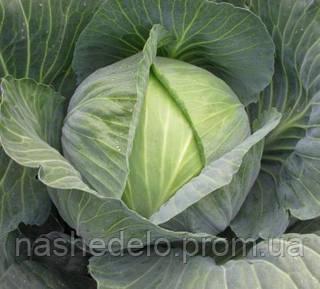 Семена капусты б/к Сати F1 2500 семян Hazera