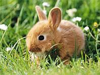 Карликовые Кролики -для подарка