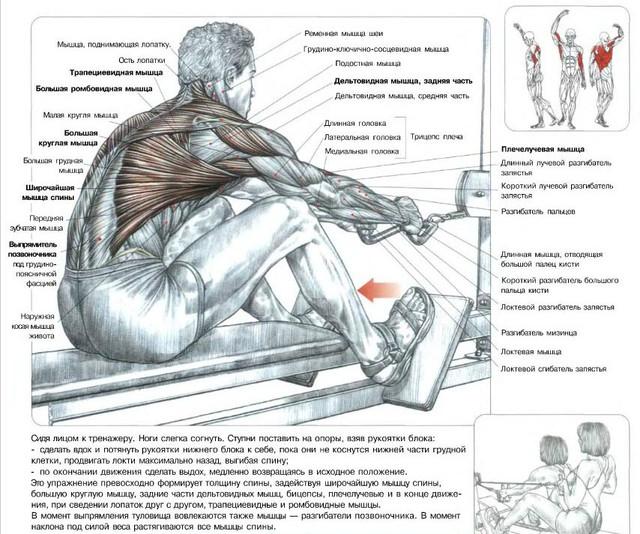 Упражнения на тягу нижнего