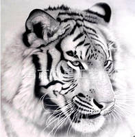 """Алмазная вышивка """"Белый Тигр"""" (черно-белая картина)"""