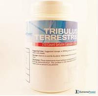 Tribulus terrestris (трибулус) 100caps/650mg
