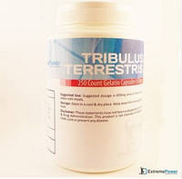 Tribulus terrestris (трибулус) 250caps/650mg