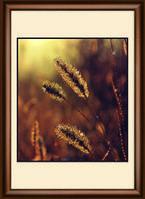 КС-1011 Солнечная роса Набор для изготовления картины со стразами Crystal Art