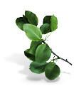 Искусственные листья, ветки 🍁