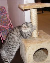 Кошачьи домики и когтеточки