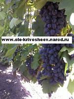 Продам саженцы винограда,сорт Атос