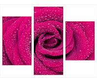 """Интерьерные фотографии на холсте из 3-х частей """"Розовая роза"""""""